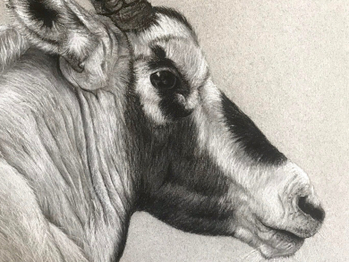 Charcoal wildlife drawing exhibition coming to Muscat this month
