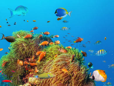 You can explore the Great Barrier Reef with David Attenborough from Muscat