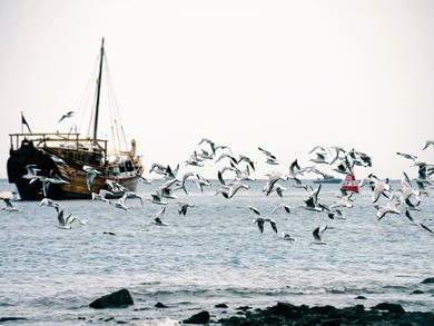 New fishing port planned for Oman's Musandam region